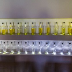 Click to enlarge image istria-olive-oil-tour-002.jpg