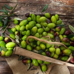 Click to enlarge image olive-picking-954.jpg